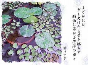 Photo_10_10
